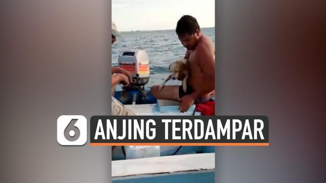 Nelayan menyelamatkan seekor anjing yang terdampar di tengah laut di pantai La Pas Bay, Baja California Sur, Mexico. Anjing tersebut dalam kondisi kelelahan karena terus berenang dan mengambang untuk bertahan hidup.