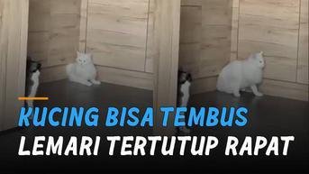 VIDEO: Bikin Penasaran, Kucing Bisa Tembus Lemari yang Tertutup Rapat
