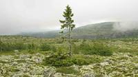 Dengan kondisi ganas demikian, sebatang pohon besar tidak bisa melanjutkan pertumbuhan hingga setua itu. (Sumber Vintage News)