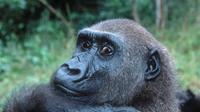 Meskit tergolong pemakan tumbuhan, beberapa hewan herbivora dapat lebih berbahaya dari hewan karnivora. Hewan apa saja?