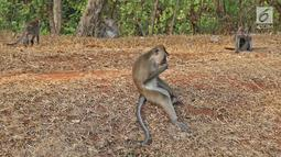 Kawanan monyet terlihat saat berkeliaran di kawasan Pantai Indah Kapuk (PIK), Jakarta, Selasa (17/9/2019). Kawanan monyet yang berasal dari Suaka Margasatwa Muara Angke tersebut keluar dari habitatnya ke jalan untuk mencari makanan. (Liputan6.com/Herman Zakharia)