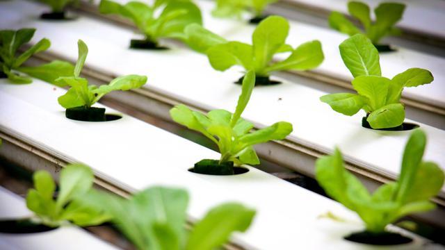 048314100 1592627213 hydroponics 4447702 1920 - Macam-Macam Hidroponik untuk Berkebun, Mudah untuk Pemula