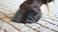 Ilustrasi kuku kuda (iStockphoto)