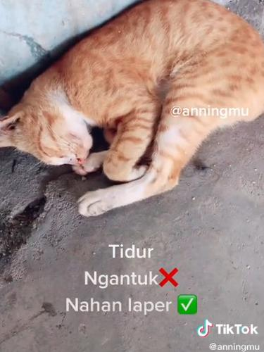 Dermawan, Pria Ini Rutin Beri Makan Kucing Liar yang Kelaparan