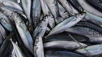 Bekerja sebagai nelayan merupakan mata pencaharian dari mayoritas warga Desa Tulehu. Ikan Cakalang dan Tatihu menjadi komoditi khas dari para nelayan di Tulehu. (Bola.com/Vitalis Yogi Trisna)