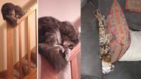 Kucing bisa tidur dimana saja