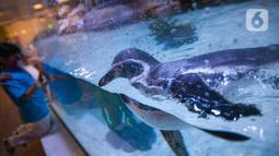 Salah satu koleksi satwa Jakarta Aquarium & Safari di Jakarta Barat, Jumat (12/2/2021). Jakarta Akuarium merupakan tempat konservasi alam dan satwa laut yang memiliki konsep edutainment sekaligus menjadi destinasi wisata untuk warga menghabiskan libur Imlek. (Liputan6.com/Faizal Fanani)