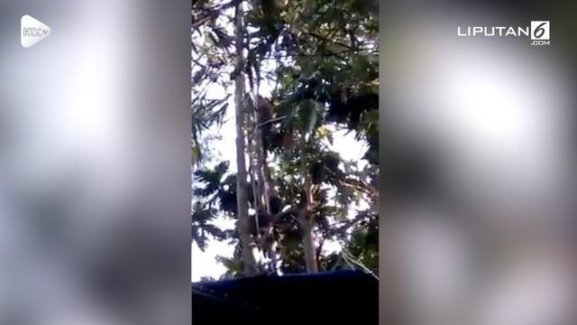 Diduga depresi, laki-laki ini bersembunyi di atas pohon jati selama 3 hari.