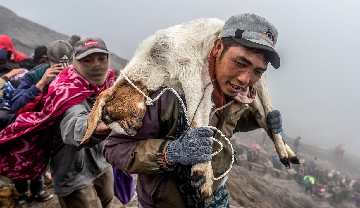 Suku Tengger membawa kambing sajen menuju puncak untuk melarungnya ke kawah dalam ritual Yadnya Kasada di Gunung Bromo, Probolinggo, Jawa Timur, Kamis (18/7/2019). Ritual Yadnya Kasada adalah upacara adat umat Hindu suku Tengger yang diselenggarakan setiap tahun. (JUNI KRISWANTO/AFP)