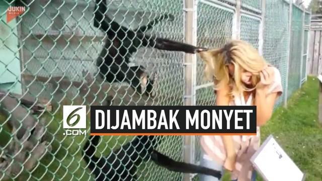 Niat awalnya sih selfie bareng dengan sepasang monyet. Namun, wanita yang satu ini malah mengalami kejadian memalukan. Karena berdiri terlalu dekat dengan si monyet, rambut wanita ini ditarik-tarik monyet tersebut.