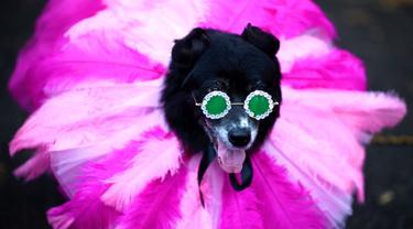 Seekor anjing mengenakan kostum ala Rihanna menghadiri Tompkins Square Halloween Dog Parade di Manhattan, New York City, Amerika Serikat, Minggu (20/10/2019). (Johannes EISELE/AFP)