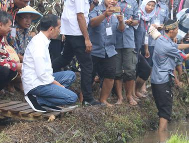 Presiden Jokowi Tinjau Gerakan Musim Tanam di Garut