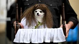 Seekor anjing mengenakan kostum ala Regan dalam film 'The Exorcist' menghadiri Tompkins Square Halloween Dog Parade di Manhattan, New York City, Amerika Serikat, Minggu (20/10/2019). (Johannes EISELE/AFP)
