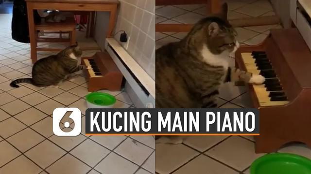 Biasanya kucing kalau mau meminta makan pasti mengeong. Tetapi berbeda dengan kucing yang satu ini justru bermain piano.