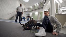 Narapidana Justin Martin dan Jonathan Ladson melihat aksi anak-anak anjing bermain di Penjara Merrimack County, Boscawen, New Hampshire, AS, Selasa (8/1). Anak-anak anjing yang dirawat para narapidana masih berumur 10 minggu. (AP Photo/Elise Amendola)