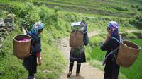 Nursida, sosok perempuan hebat yang bantu pemerataan ekonomi digital dari desa ke desa. (Foto: Unsplash)