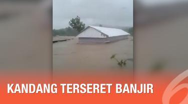 Ribuan ayam ikut menjadi korban banjir yang melanda Kabupaten Maros, Sulawesi Selatan. Ayam beserta kandangnya hanyut terseret arus banjir.