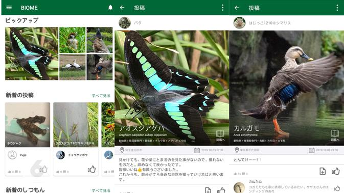 Tampilan aplikasi pangkalan data spesies flora dan fauna Biome. Liputan6.com/Mochamad Wahyu Hidayat