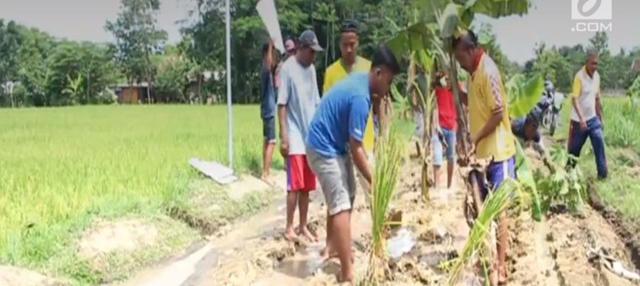 Warga ini menanam pohon pisang di sepanjang jalan yang sudah hancur sejak tiga tahun terakhir, yang tidak ada perbaikan sama sekali.