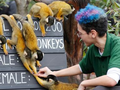 Penjaga menghitung jumlah monyet tupai saat melakukan sensus tahunan di Kebun Binatang ZSL London, Inggris, Kamis (2/1/2020). Kebun Binatang ZSL London melakukan sensus tahunan terhadap lebih dari 500 spesies. (AP Photo/Frank Augstein)