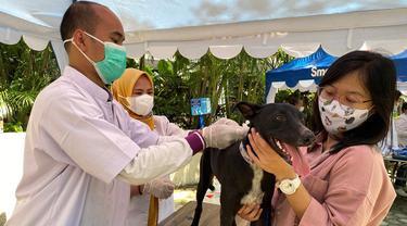 Sambut Hari Rabies Sedunia, Kenali Manfaat Vaksinasi Rabies untuk Anjing Peliharaan Anda