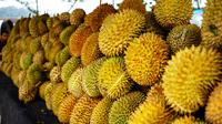 Festival Durian Sinapeul 2017 yang digagas oleh Pemerintah Kecamatan Sindangwangi, Kabupaten Majalengka, Jawa Barat. Bukan hanya Durian, pesona Majalengka juga akan tersaji di acara yang dijamin seru ini.