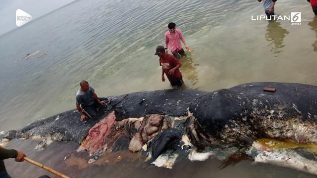 Seekor paus sperma mati setelah menelan tumpukan sampah.
