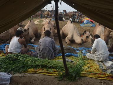 Pedagang duduk dekat unta untuk hewan kurban yang dijual di sebuah pasar hewan di Lahore, Pakistan, Minggu (4/8/2019). Umat Islam di seluruh dunia akan merayakan Hari Raya Idul Adha yang identik dengan tradisi berkurban seperti kambing, domba, onta, sapi dan kerbau. (ARIF ALI / AFP)