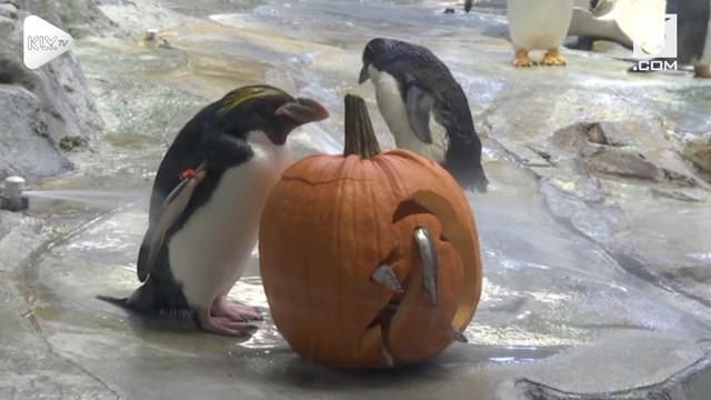 Keseruan perayaan Halloween di Kebun Binatang Detroit, Amerika Serikat.