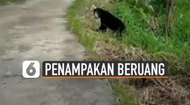 Baru-baru ini beredar video munculnya beruang madu di dekat sawah. Kejadian ini terjadi di daerah Sumatera Barat.