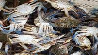 Rajungan termasuk salah satu produk unggulan Ekosistem Laut Lepas Indonesia. (Dok FAO Indonesia)