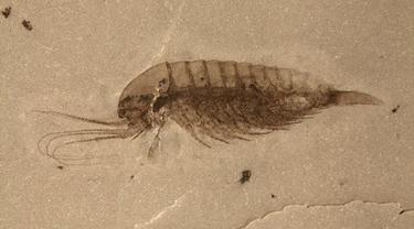Temuan fosil di Hubei, China (kredit: Ao Sun)