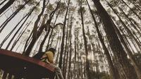 Hutan Pinus Mangunan Yogyakarta (dok.Instagram@qori031193/https://www.instagram.com/p/BthO_JvgTSN//Devita