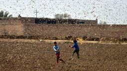 Anak-anak berusaha menghindari serbuan belalang di Distrik Okara, Provinsi Punjab, Pakistan timur (15/2/2020). Serangan belalang terhadap tanaman telah menyebabkan kerugian finansial yang besar bagi para petani di beberapa wilayah negara tersebut. (Xinhua/Str)