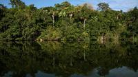 Hutan Amazon di Bolivia (Voyagers)