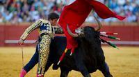 Bukan warnanya, ternyata banteng merasa terancam saat matador menggerakan kain merah (Sumber foto: timeline.com)