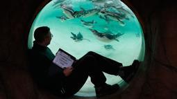 Penjaga menghitung jumlah penguin saat melakukan sensus tahunan di Kebun Binatang ZSL London, Inggris, Kamis (2/1/2020). Kebun Binatang ZSL London melakukan sensus tahunan terhadap lebih dari 500 spesies. (AP Photo/Frank Augstein)
