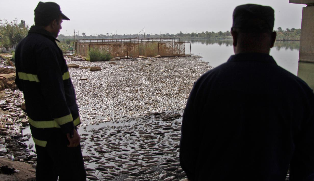 Image result for ribuan ikan mati di irak
