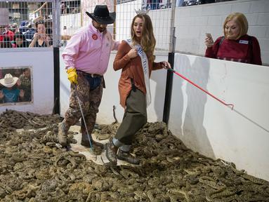 Miss Texas Margana Wood didampingi pawang ular berada di dalam kandang penuh ular derik saat acara Swingter Rattlesnake Sweetwater di Nolan County Coliseum (10/3). Dalam acara ini ribuan ular derik berbisa dikumpulkan di sebuah kandang. (AFP/Loren Elliot)