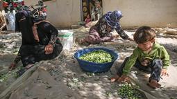 Wanita Palestina menyortir buah zaitun selama musim panen di Khan Younis, Jalur Gaza Selatan pada 6 Oktober 2019. Memanen zaitun dianggap sebagai perayaan bagi warga Palestina dan hari yang menggembirakan bagi para petani di Gaza, serta Palestina pada umumnya. (SAID KHATIB/AFP)