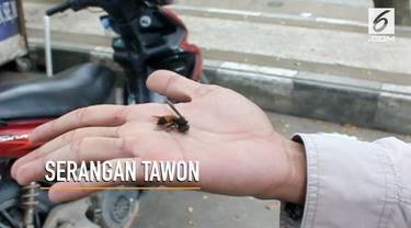 Sejumlah orang di taman cerdas Samarinda menjadi korban serangan tawon.