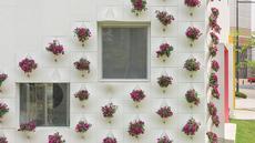 Ide menghijaukan rumah ternyata tidak terbatas pada media tanam pot ataupun tanah. Sebagai contoh, kantor bisnis milik OA: Lab ini memanfaatkan dinding eksteriornya sebagai media tanam yang cantik. Wow!(Lightersideofrealestate.com)