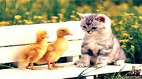 Apa yang terjadi jika hewan bisa harmonis, terutama bersahabat pada musuhnya? Hal yang mustahil justru terjadi.
