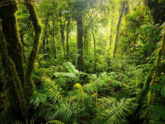 Miris, Manusia Rusak Hutan Tropis Seluas Inggris pada 2018 - Global  Liputan6.com