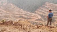 Maraknya pembukaan lahan perkebunan memicu semakin berkurangnya tutupan hutan di Sumatera. (Liputan6.com/B Santoso)