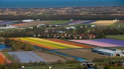 Pandangan udara ladang bunga tulip di Keukenhof, Lisse, Belanda, Rabu (10/4). Ladang tulp ini menarik jutaan wisatawan setiap tahunnya. (AP Photo/Peter Dejong)