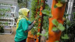 Petugas mengecek kondisi bibit bunga di Balkot Farm yang terletak di Balai Kota DKI Jakarta, Senin (16/9/2019). Dengan adanya Balkot Farm ini, dapat bermanfaat untuk menyerap polutan dan meningkatkan kualitas udara.  (Liputan6.com/Faizal Fanani)