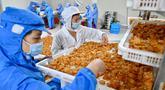 Para pekerja memilah kerang abalon di sebuah perusahaan, Lianjiang, Provinsi Fujian, China, 14 Juli 2020. Industri budi daya abalon di Lianjiang telah ditingkatkan dan dikembangkan melalui pengenalan platform budi daya laut dalam dan inovasi beragam keterampilan budi daya. (Xinhua/Jiang Kehong)