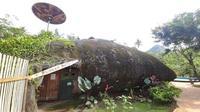 Rumah berdesain unik di Wonogiri bikin orang yang melintas kehilangan fokus. Bagaimana tidak, rumah tersebut menyerupai batu besar. (Solopos/ Aris Muandar)