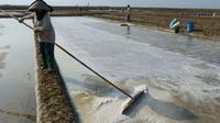 Sedikitnya 300 hektare tambak garam di Kabupaten Cirebon terkikis akibat abrasi tiap tahunnya. Foto : (Liputan6.com / Panji Prayitno)